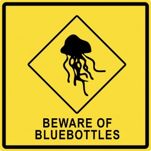 beware of bluebottles