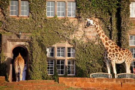 Giraffe mansion Nairobi