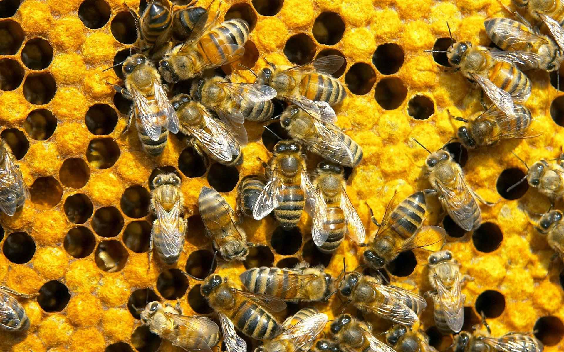 Propolis – a Natural Medicine of the Modern World